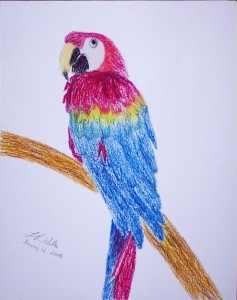 Macaw-oilpastel_cropped
